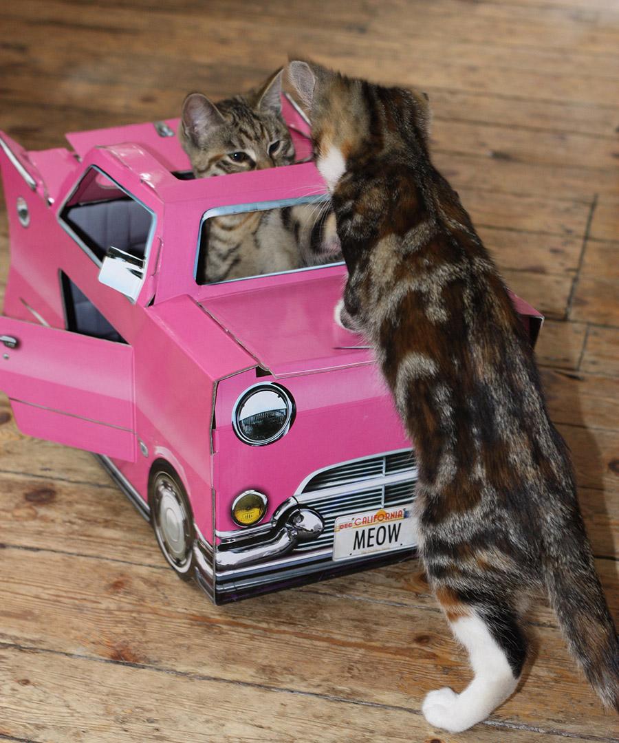 discount catillac cat toy secretsales. Black Bedroom Furniture Sets. Home Design Ideas