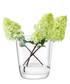 Otto clear glass vase 27cm  Sale - lsa Sale