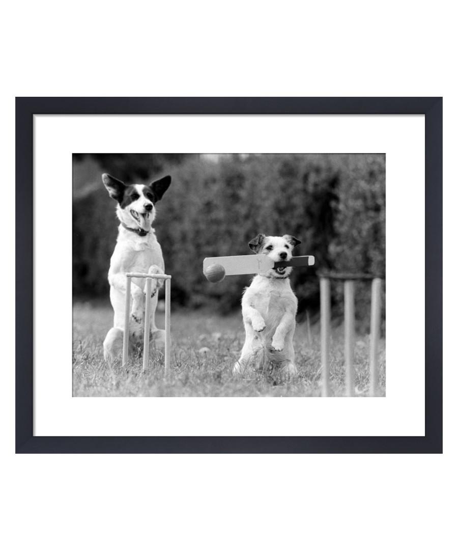 Cricket In The Park framed print Sale - The Art Guys
