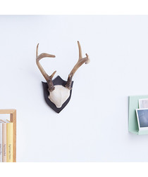 Taxidermy brown antler wall hanger