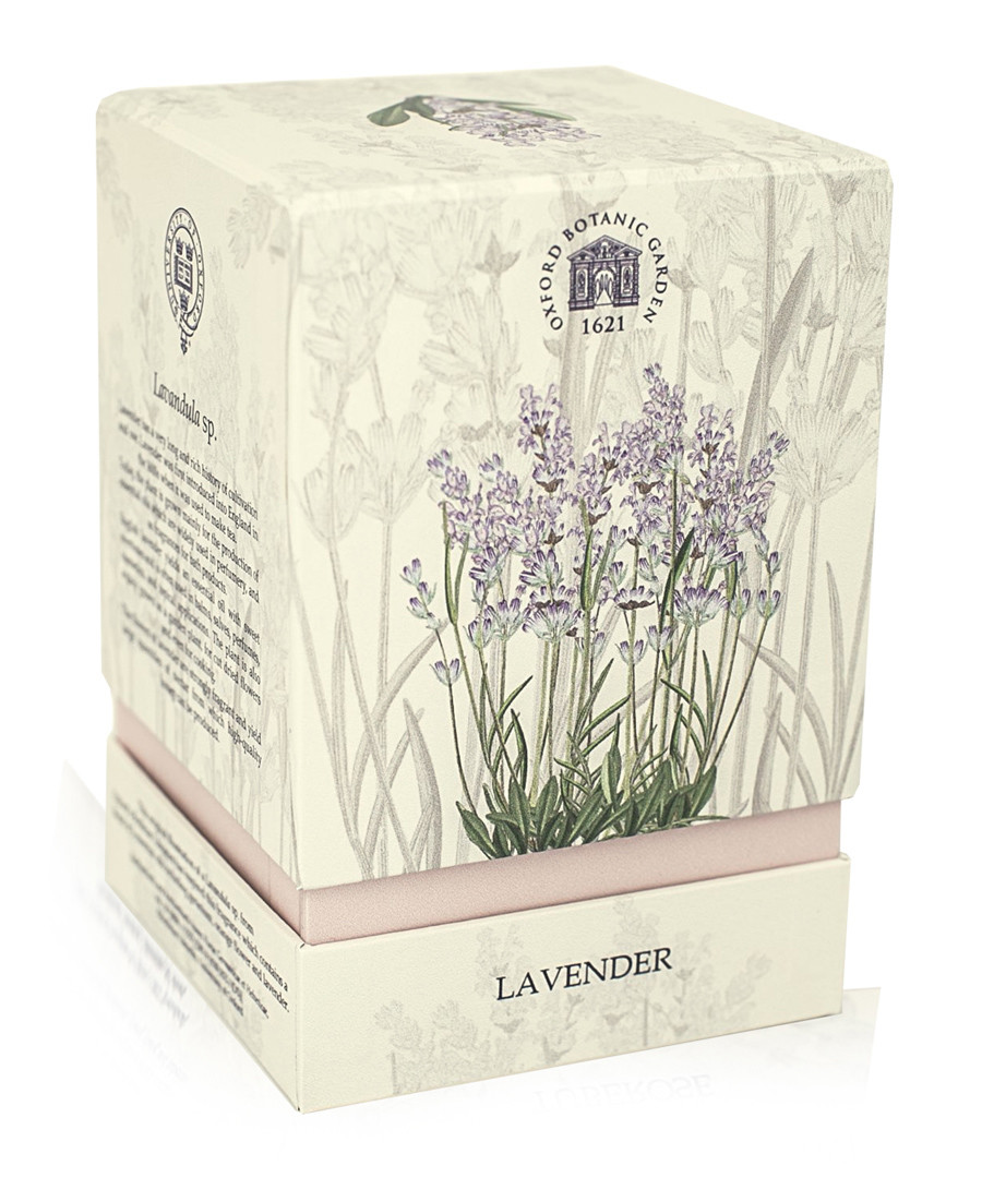 Lavender gift box candle Sale - oxford university