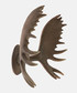 Moose antlers wall hanger Sale - Walplus Sale