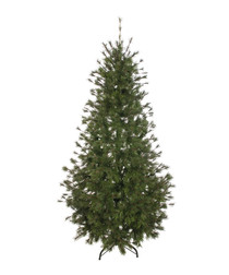 Green Scotch pine tree 1.8m